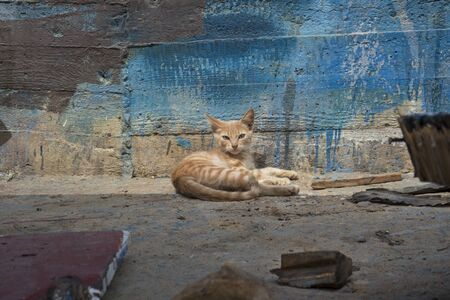 Alert red striped kitten lying against an old painted wooden wall Фото со стока