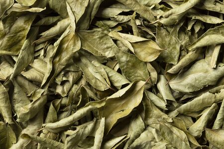 Dried curry leaves close up full frame for background