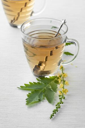 Glass cups with Agrimony tea and a fresh twig of Agrimony flowers Reklamní fotografie