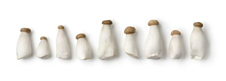 Row of fresh mini king oyster mushrooms isolated on white background