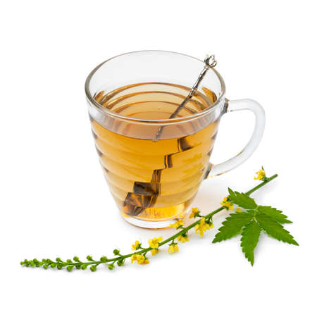 Glass cups with Agrimony tea and a fresh twig of Agrimony flowers isolated on white background