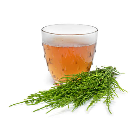 Glass cup with hot field horsetail herbal tea and fresh green twigs close up isolated on white background Фото со стока