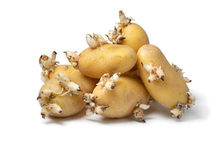 Heap of sprouted organic potatoes isolated on white background