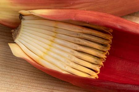 Little bananas in a fresh raw tropical banana flower close up