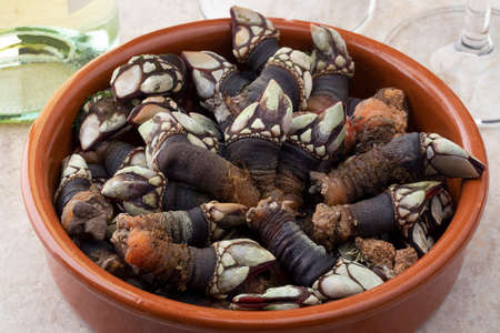 Fresh cooked goose barnacles in a bowl close up as snack food Фото со стока