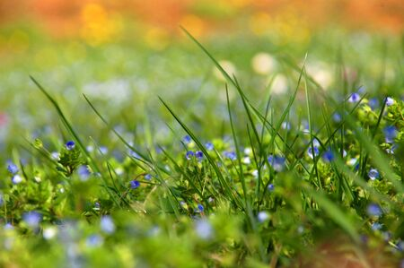 natue: A grass lawn in the spring.