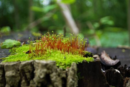 Moss and new growth on a tree stump