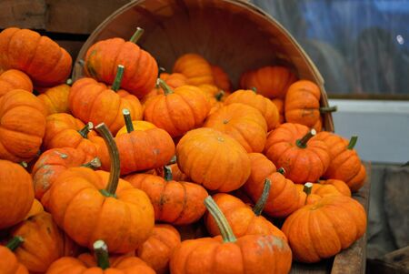 basket overflowing with small pumpkins