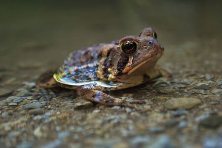 Close up view of a frog in the water Foto de archivo - 133538670