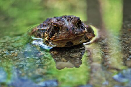 Close up view of a frog in the water Foto de archivo - 133538673