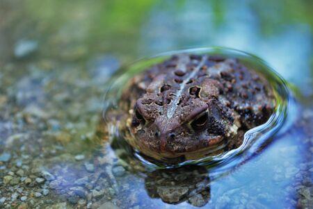 물 속에서 개구리의 보기를 닫습니다 스톡 콘텐츠