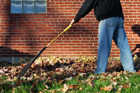 Caucasian man with large brown afro raking leaves in the fall