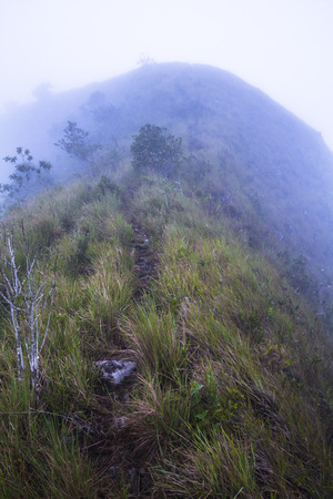 epiphyte: On top of the cloudy Crater Rim in El Valle de Anton, Panama