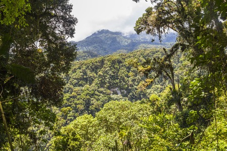 humid south: Nice overview of the dschungle landscape in Panama