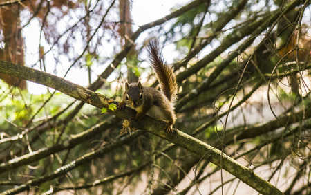 tree position: Chipmunk in position, sitting on a tree watching