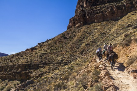 kaibab trail: Mulis on Grand Canyon Trail going uphill