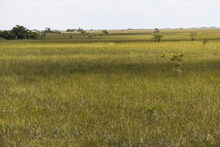 Wide swamp landscape in Everglades Park, Florida