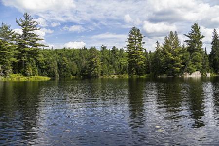 provincial forest parks: Algonquin Parc nature in Canada, on canoe tour