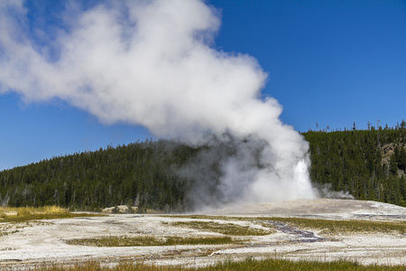 faithful: Old faithful geysir eruption in Yellowstone National Park