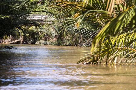 mekong: In jungle of Mekong River Delta, Vietnam