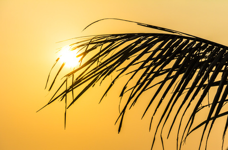 color: Nice Palm tree leaf on Phu Quoc Island at sunset, Vietnam Stock Photo