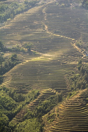 pa: Rice terraces landscape in Sa Pa, Vietnam