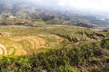 pa: Rice terraces landscape in Sa Pa, Vietnam
