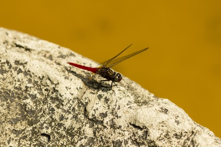 botanical garden: Dragon-fly on stone in Singapure botanical garden