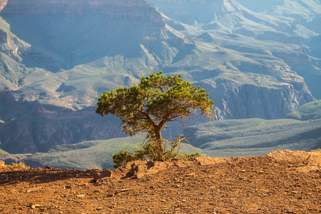 tenacious: Lonely tree inside Grand Canyon, Arizona, USA