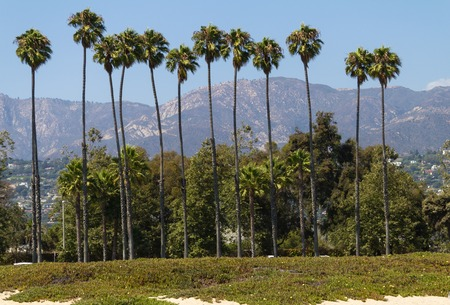 Tall palm trees in Santa Barbara, California, USA Stock Photo