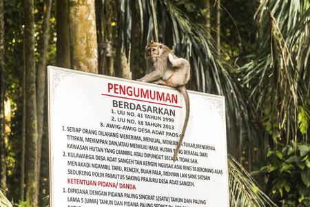 Monkey sitting on sign on Bali, Indonesia