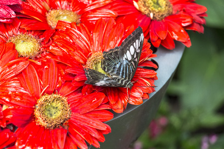 butterfly garden: Inside the butterfly Garden of Singapore Changi Airport Stock Photo