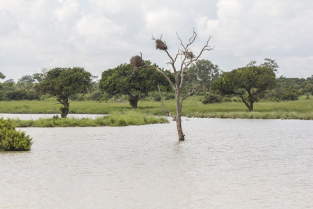alluvial: Tree in a flooded area in Kruger Park in South Africa