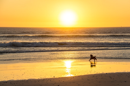 Dog barking at sunset on beautiful beach in Cape Town Stock Photo
