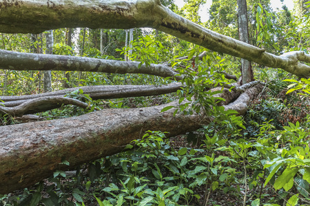 Fallen trees in the jungle of Koh Chang,Thailand Stock Photo