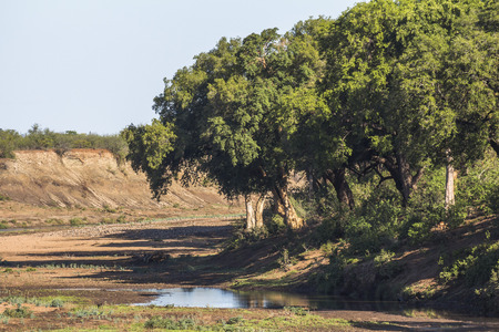Dry river in Kruger Park in South Africa