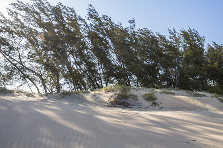 Sand dunes of St. Lucia in South Africa