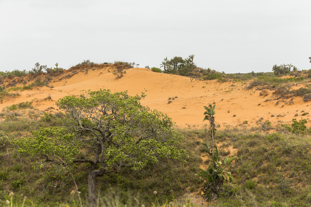 Red sand dunes in St. Lucia wetlands park in South Africa