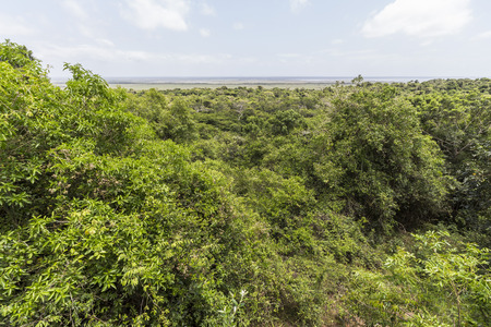 St. Lucia wetlands park landscape, South Africa