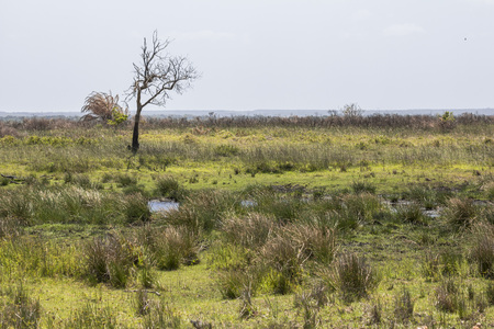 St. Lucia wetlands park landscape, South Africa