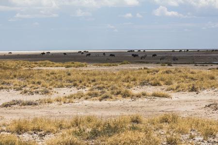 Steppe with animals in Etosha Park, Namibia Stok Fotoğraf - 120562387