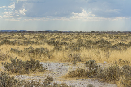 Steppe with animals in Etosha Park, Namibia