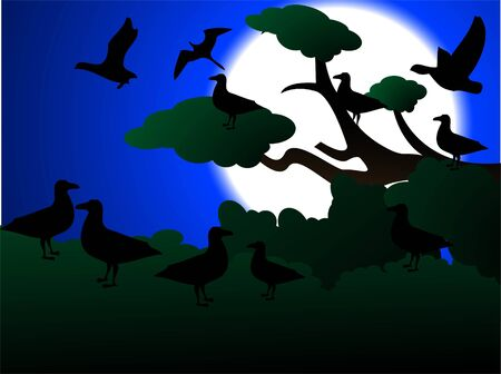 birds flying and sitting over tree at night     photo