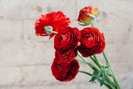 Red ranunculus flowers with free space for text or advertising