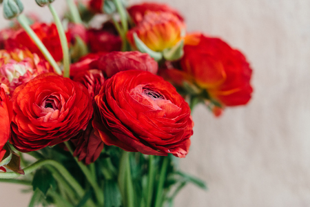Bouquet of red ranunculus flowers on a rustic background. Close up