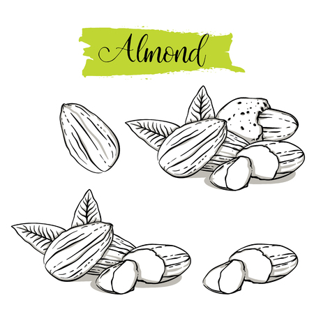 Hand drawn sketch style almond set. Single, group seeds, almond in nutshells group. Organic nut, vector doodle illustrations collection isolated on white background.