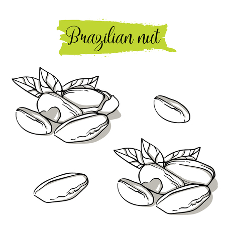 Hand drawn sketch style brazilian nut set. Single, group seeds, brazilian in nutshells group. Organic nut, vector doodle illustrations collection isolated on white background.