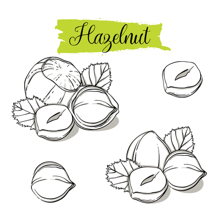 Hand drawn sketch style Hazelnut set. Single, group seeds, hazelnut in nutshells group. Organic nut, vector doodle illustrations collection isolated on white background. Stock Illustratie