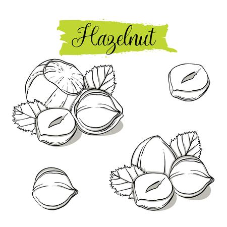 Handgezeichnete Skizze Haselnuss-Set. Einzel-, Gruppensamen, Haselnuss in Nussschalen-Gruppe. Organische Nuss, Vektor-Doodle-Illustrationen-Sammlung isoliert auf weißem Hintergrund.