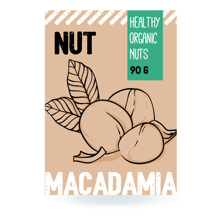 Beautiful vector hand drawn macadamia organic nut. Template elements for packaging design. Modern illustrations isolated on white background.